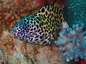 we semi-regularly find spotted moray eels on our dives in Dar. Note, this is not the same animal as the spotted snake eel above.