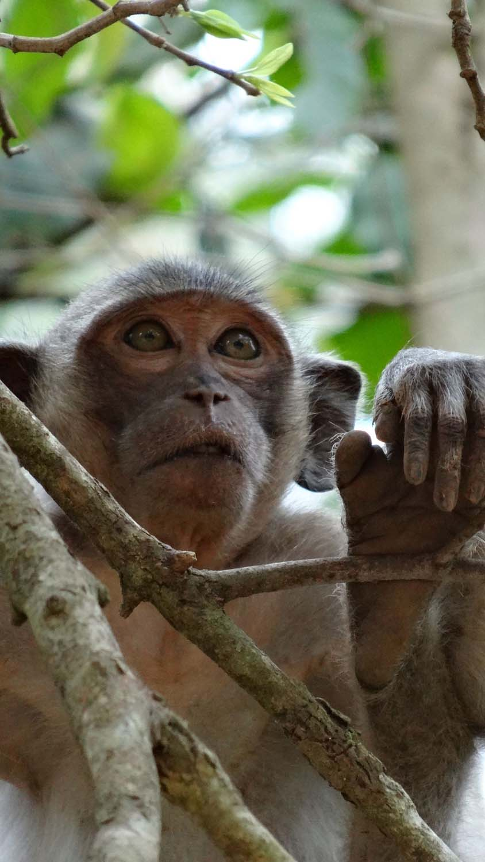 cheeky monkey in Angkor Thom