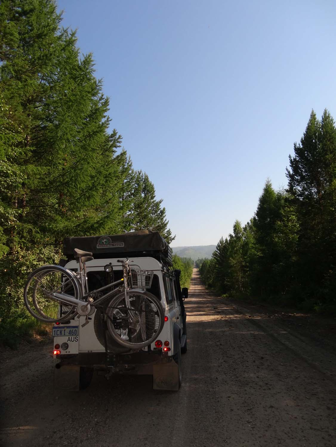 weird driving in pine forests after the emptiness of Mongolia