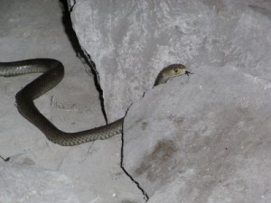 snake in the cave