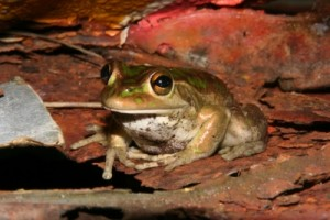 we found a frog in the cave, probably loving all the mud