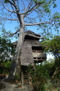 our treehouse underneath a majestic baobab