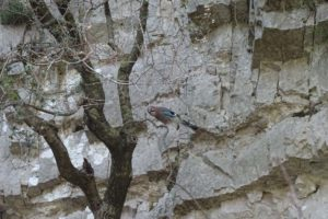 we spot the pretty Eurasian Jay in the Imbros Gorge