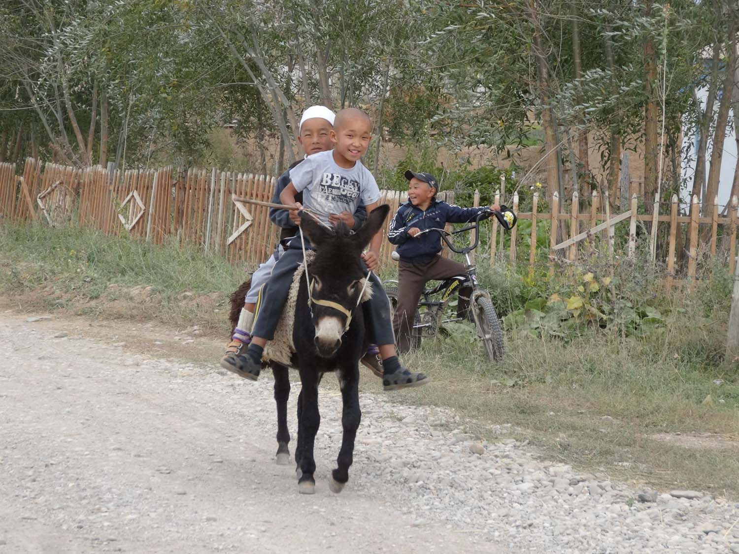 2 boys riding a donkey, usually adults ride them which always looks a bit silly
