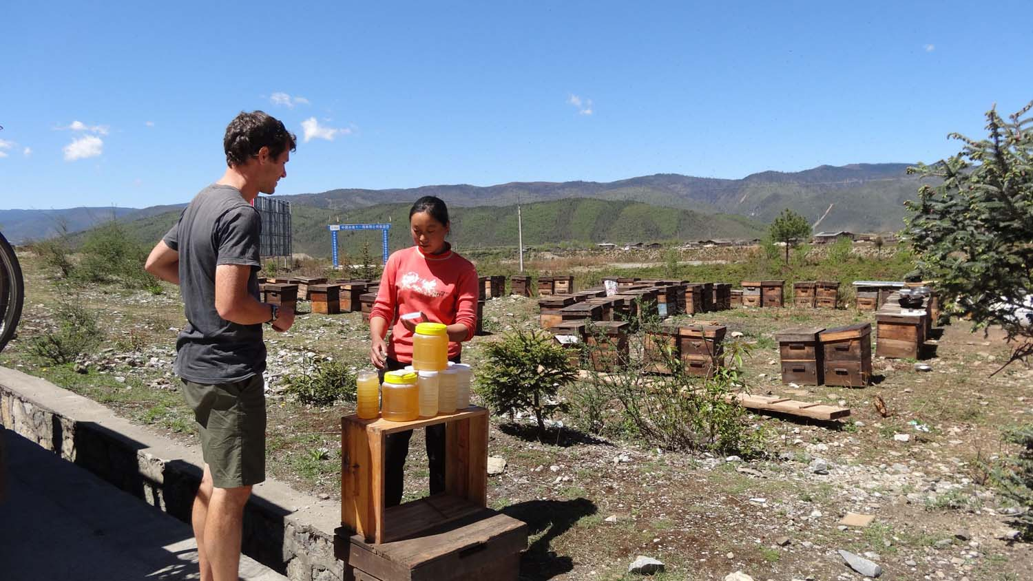 buying honey directly from the beekeepers alongside the road