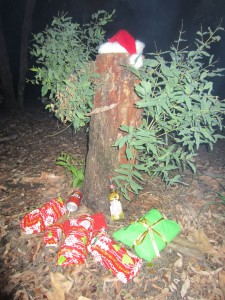our xmas tree at our Waddy Point (first) camp site