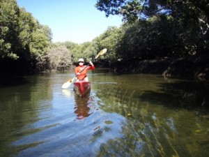 Jude paddling the mangroves around Garden Island