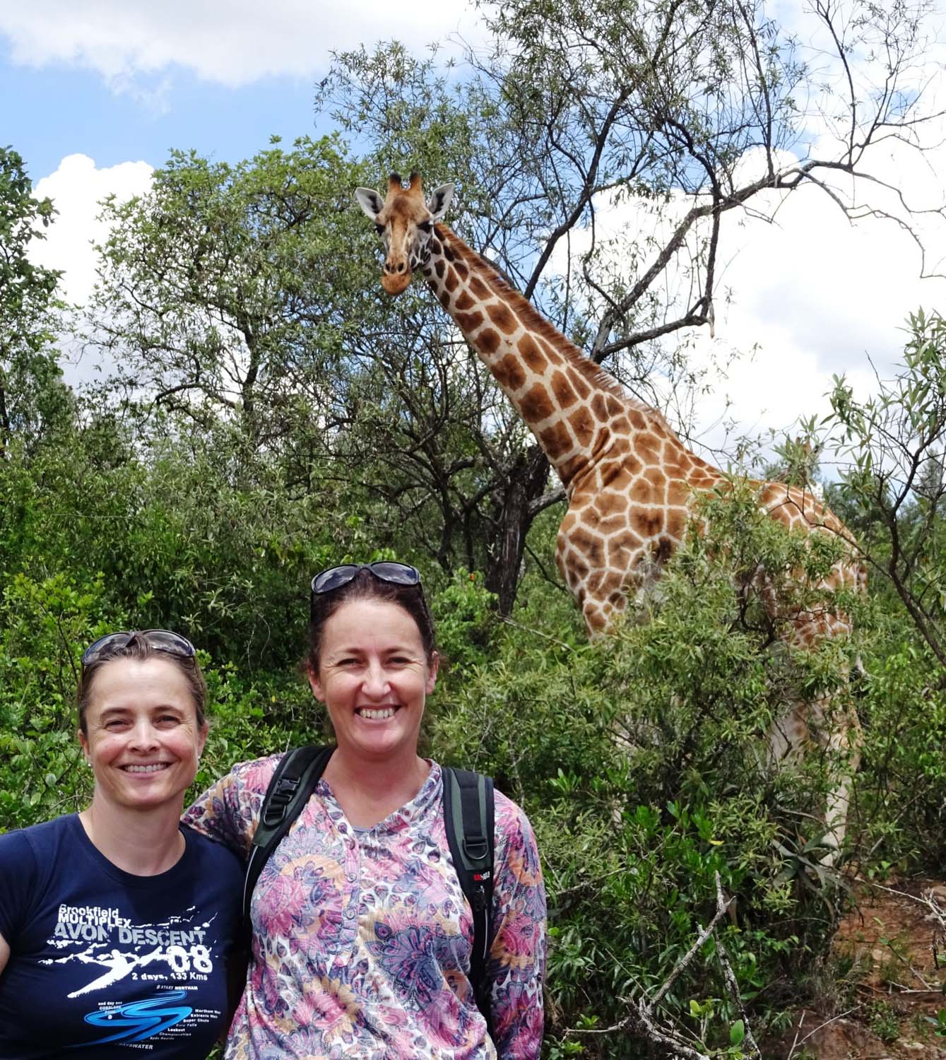we were lucky to bump into a few giraffes on our walk in the giraffe centre