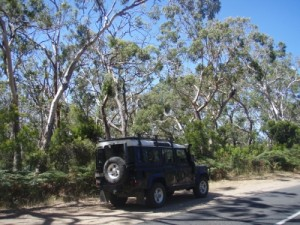 Lara and gum trees