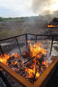 burning the 686 rhino horns (from 343 rhinos)