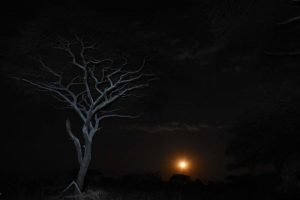 moonrise in Katavi NP