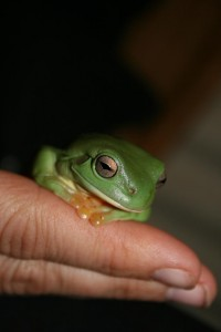 very cute tree frog
