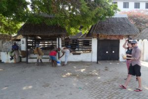 there is a donkey centre on Lamu, but we still see quite a bit of abuse in the few days we are there