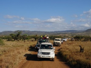 arriving in the Lewa Conservancy with many others, Helen and James in the white car