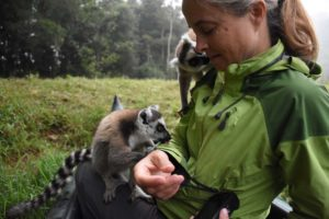 the ring-tailed lemurs are very interested in Jude's jacket and keep licking it (maybe time to wash it?)