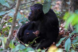 Yuna nursing her tiny baby