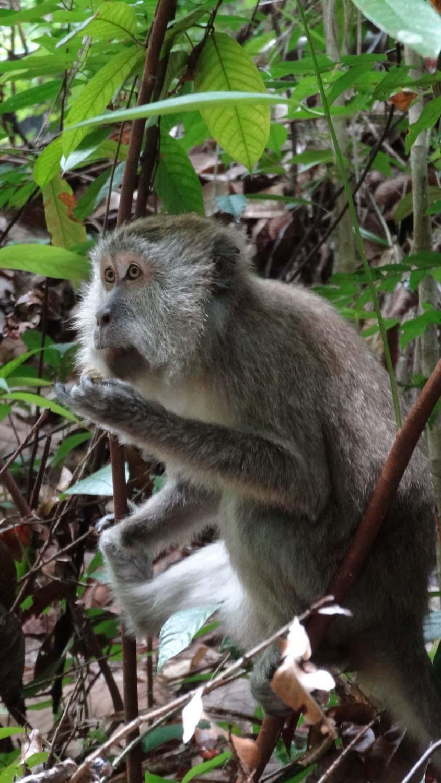 and monkey again