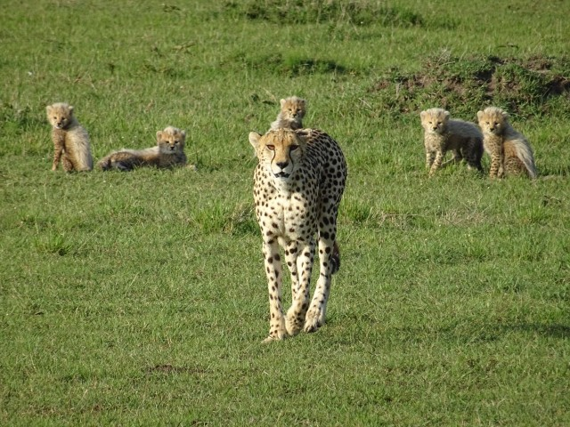 New Year's in the Mara