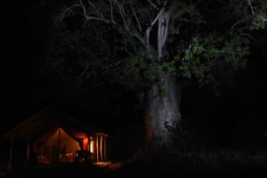 our home for the xmas break in Mkomazi NP, under a huge, flowering baobab tree