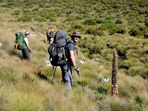 hiking through the big tussocks of grass makes for a lot of zigzagging