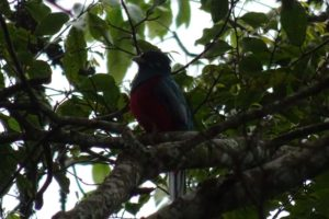 we spot a narina trogon before we even start the walk