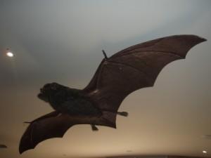 model of the bats