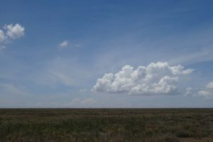 a view from the ground of the treeless Ndutu Plains