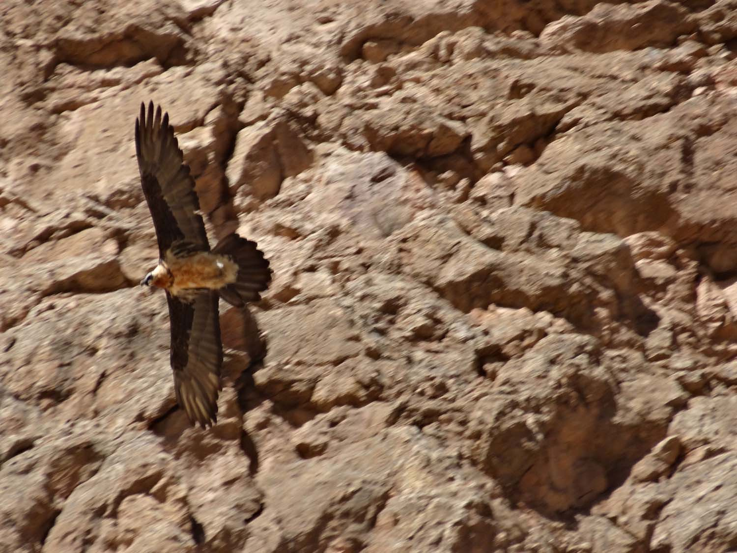 huge bird of prey circling the rocks