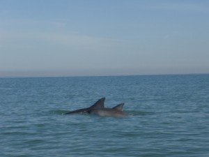 we spot the dorsal fins, luckily they are from dolphins!