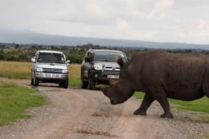 a rhino crossing in between our cars makes you realise how big they are!