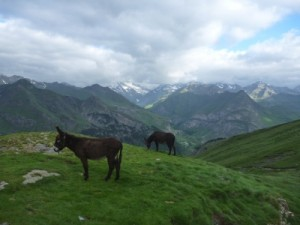 2 donkeys and an amazing view