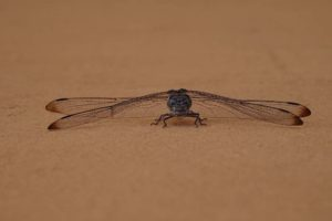 a gorgeous dragon fly sits on the wall beneath us