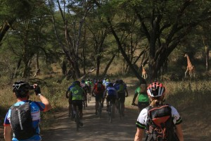 riding through Lake Nakuru NP with the peloton with the giraffes racing next to us