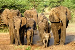 a gorgeous family on their way to some water