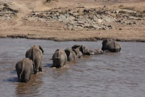 during our breakfast the wildebeest didn't cross, but the elephants did...