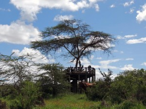 lunch on top of a platform overlooking a waterhole