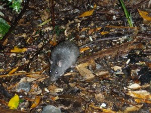 a little friend comes to visit our camp site in the night we celebrate New Year's Eve (one day early)