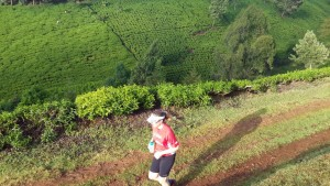 running through the tea plantations in Tigoni with the Swaras