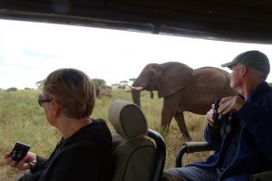 elephants come to say hello to Nico and Riet in Tarangire NP