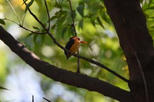 Jude spots a tiny African pygmy kingfisher and Jon is happy as he had never seen one before