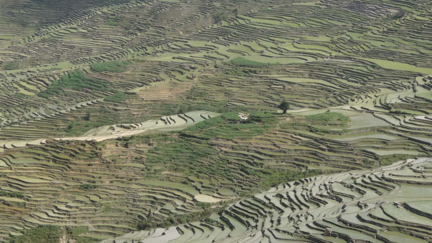 rice terraces everywhere
