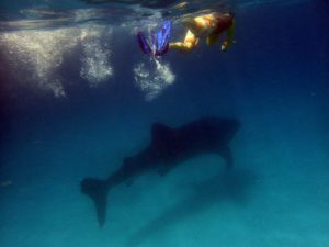Jon with the first whaleshark of the day