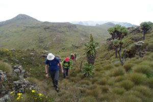 Mart, Jude and Alex heading to the highest peak in the Aberdare NP