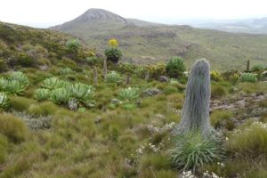 we are high enough for the beautiful african alpine plants