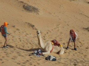 so we waited until the camel herder came to pick them up
