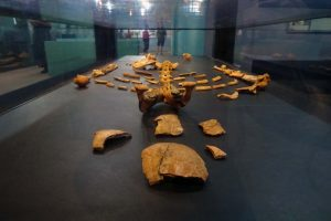 the remains of Lucy, the very famous 3.2 million year old girl