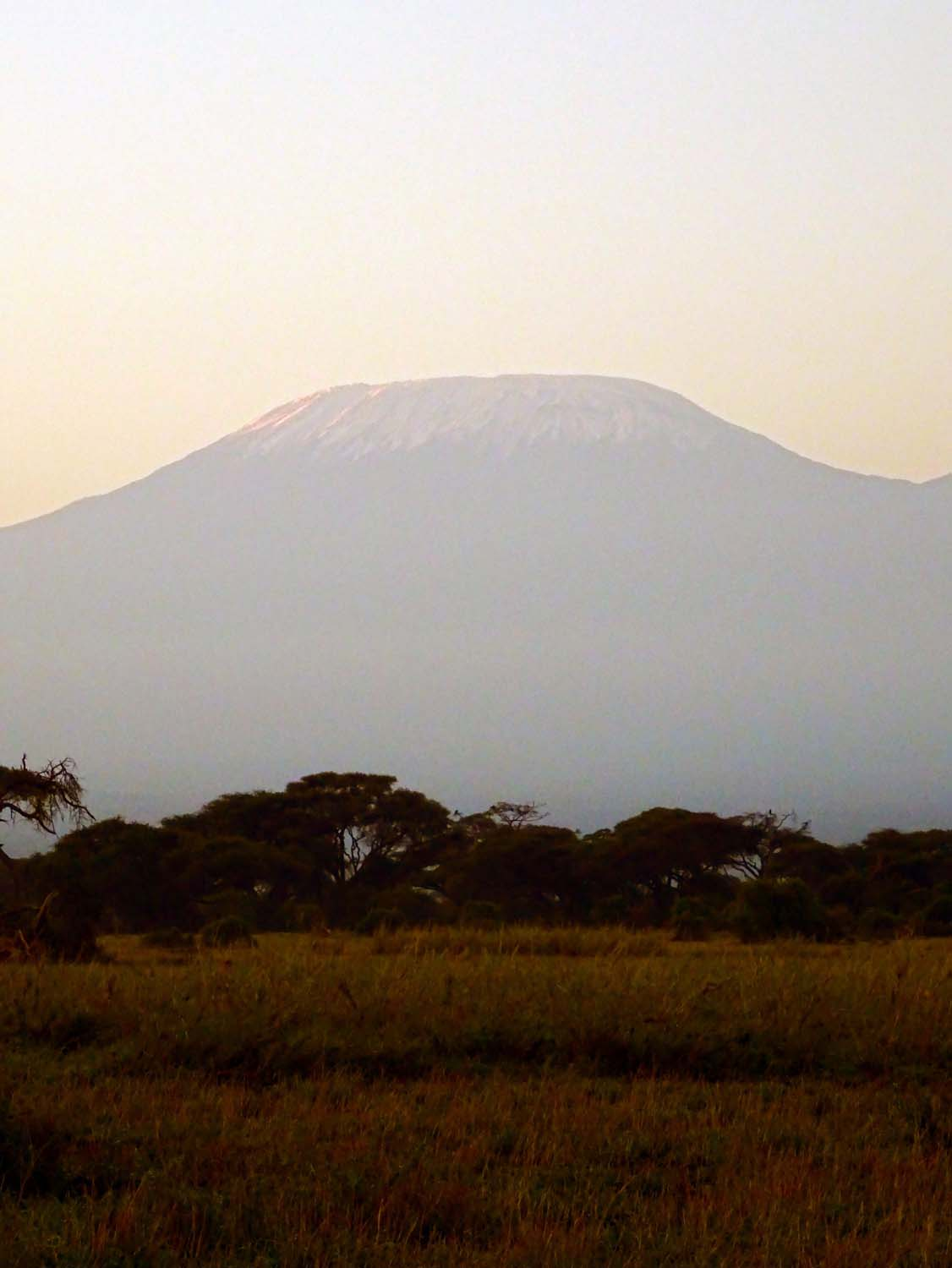 with the imposing highest mountain in Africa (Kilimanjaro) as a backdrop in Amboseli NP