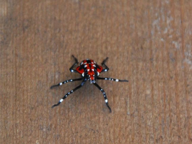 love the bright red beetles, no idea what it is, but it sure was a cool little critter