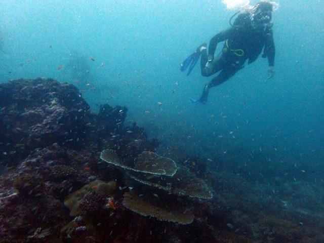 Diving in Dar es Salaam