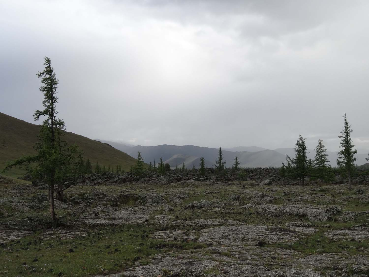 old lava fields and pine trees